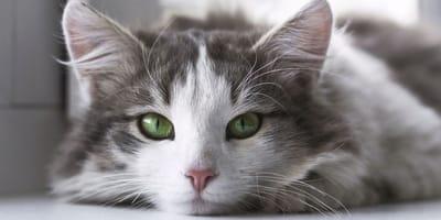 I gatti non hanno sempre vissuto con l'uomo: lo studio