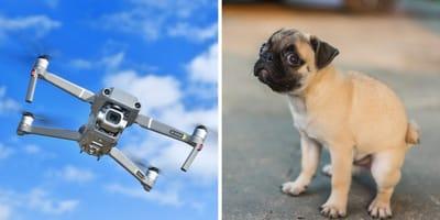 Drohnen gegen Hundehaufen?