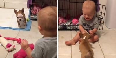 cucciolo di bulldog francese e bimbo giocano insieme