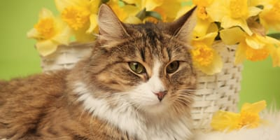 gato plantas toxicas