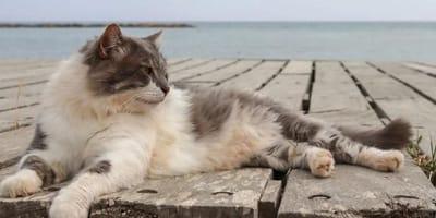 Cat lies on pontoon