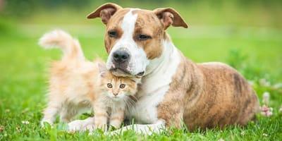 cane e gatto sull'erba
