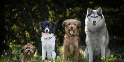 quattro cani su sfondo naturale