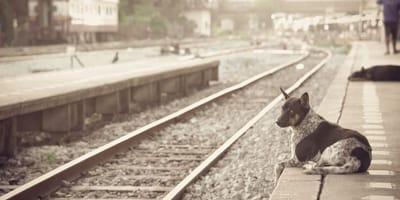 Perro metro plataforma