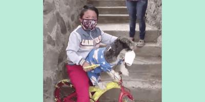 niño y perro con cubreboca