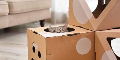 recicla las cajas de amazon