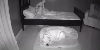 camara de vigilancia perro y niño