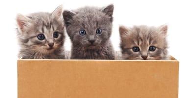 ¿Dónde puedo adoptar un gato en Chihuahua? Los refugios donde encontrarás un peludo amigo
