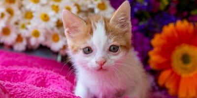 Gatos con síndrome de down: ¿es posible que lo padezcan?