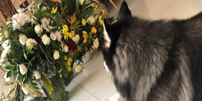 perro funeral