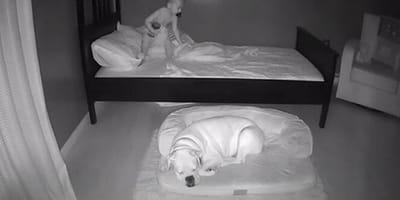 Kleine jongen met slapende hond