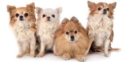 ¿Sabes cuántos perros hay en España?