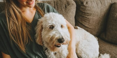 What is pet sitting and pet borrowing?