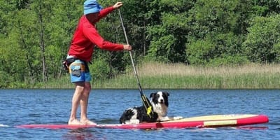 Stand up paddle col cane: tutto sullo sport dell'estate!