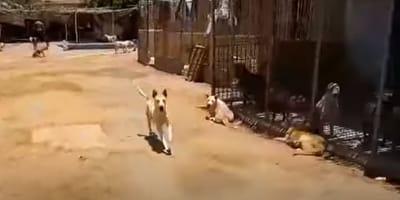 mixed breed dog runs on sandy ground
