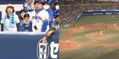 """Gatto randagio """"entra in gioco"""" durante una partita di baseball (Video)"""