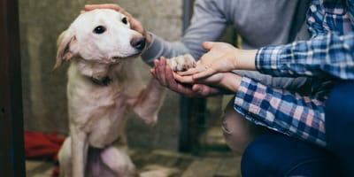 10 requisitos para adoptar un perro que nadie te dice