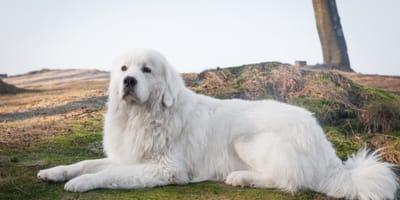 Discover 5 Polish dog breeds