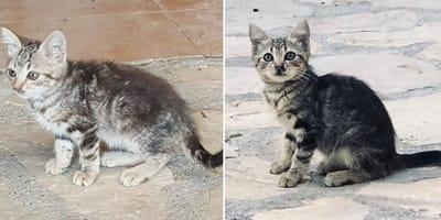 bebe gato en la calle abandonado