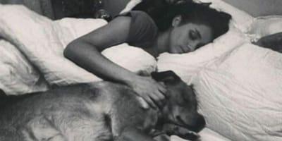 meghan markle tumbada perro cama