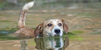 Wasserrute beim Hund: Alles über die schmerzhafte Erkrankung