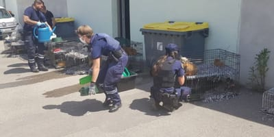 police officers watering dogs in cages