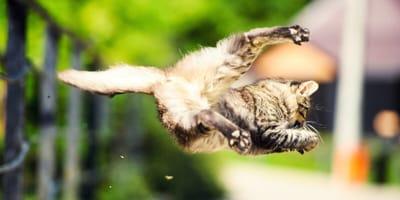 skaczący kot