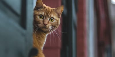 Bar owners shocked when they see what their cat is carrying in his mouth