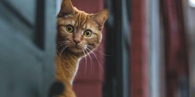 Rosyjski kociak-złodziejaszek: nie uwierzycie, co próbował wynieść z baru!