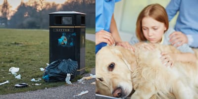 bin overflowing with litter and golden retriever on vet's table