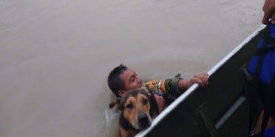 soldado rescata perro tamaulipas