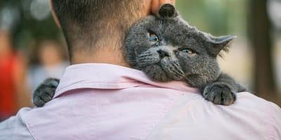 Día Internacional de la Amistad: las señales infalibles de que tu gato es tu mejor amigo