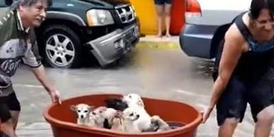 Dogs in bucket in flooded street