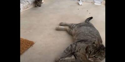Bezpański kot śledzi pewną parę. Kiedy orientują się dlaczego, nie mogą uwierzyć własnym oczom! (VIDEO)