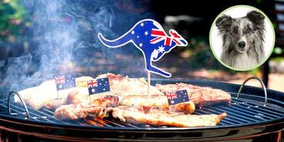 Kängurufleisch für Hunde