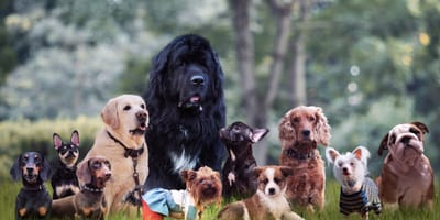 See the top 10 of the cutest dog breeds. Pick your favourite!