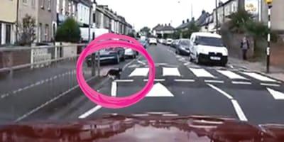 gato cruza la calle