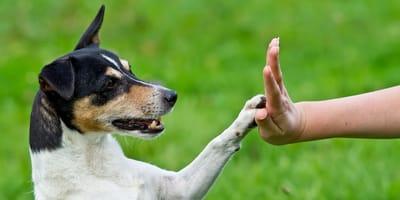 ¿Cómo enseñar a mi perro a saludar?