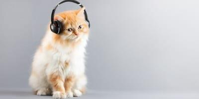 musica ideal para gatos
