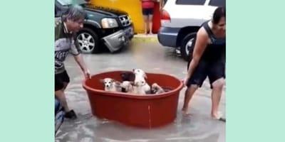 inundación rescate perros