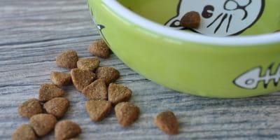 Cosa rende il cibo appetibile per i gatti?