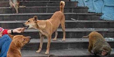 Lo splendido gesto di alcuni ragazzi per i cani randagi del quartiere