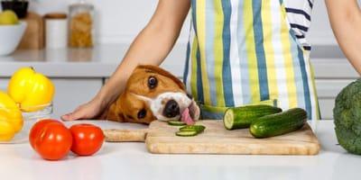 cane ruba fettina di cetriolo dalla cucina