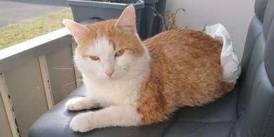 gatito con pañal