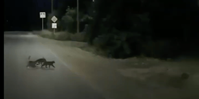 gatos rescatan a un perro