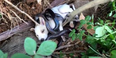 perro serpientes