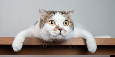 un gatito con cara de molesto