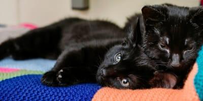 Dwoje czarnych kociąt