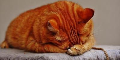 gatto-rosso-triste