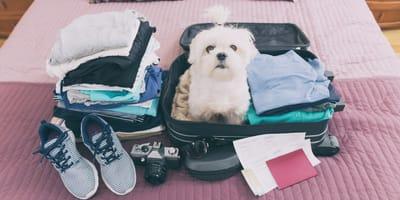 ¿Te vas de vacaciones y no tiene dónde dejar a tu mascota? Zarpas y Colmillos es la solución